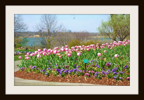 Arboretum lake and tulips - Dallas