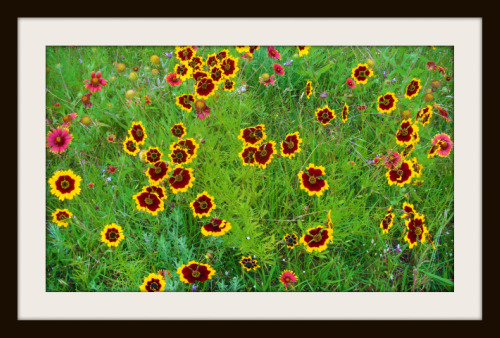 wildflowersframed