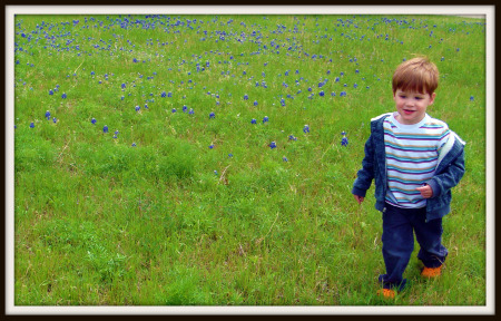New bluebonnet field