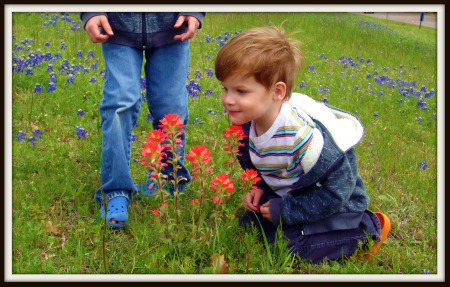 Boy smells Indian paintbrush flower in bluebonnet field