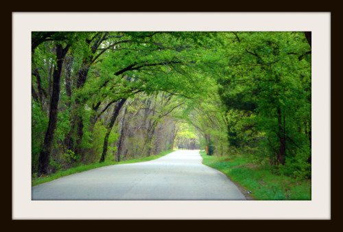 Tunnel of trees on Old Alton Road in Argyle, Texas