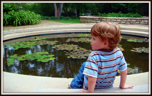 Fort Worth Botanical Gardens - lilly pond