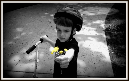 Reid hands dandelions