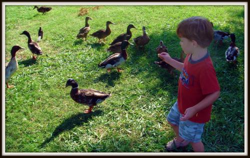 Rhett feeds ducks