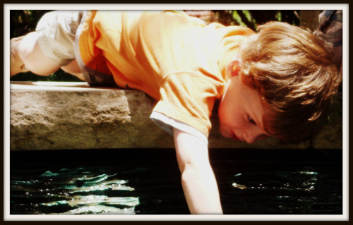 Rhett reaching into a pond