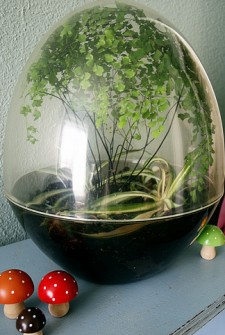 DIY Terrarium's (or Mini-Ecosystems)