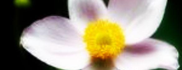 grapevine_botanical_gardens