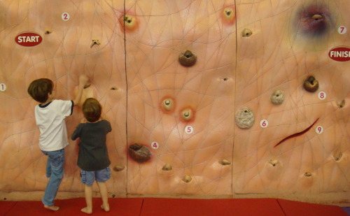 Grossology skin climbing wall