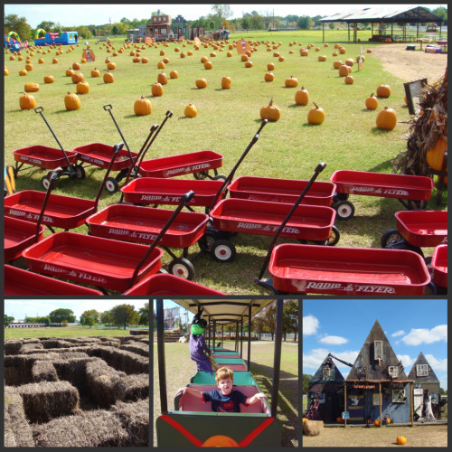 Pumpkin Express Pumpkin Patch Collage