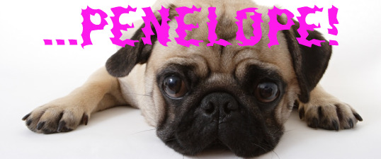 Penelope the pug - feature