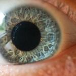 Eye of preschooler