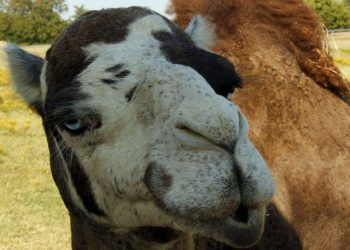 mommy blogger camel