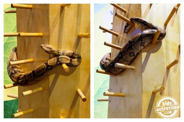 De vraies photos de serpents - inspiration pour l'artisanat des serpents