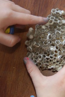 preschooler playing with a wasp nest