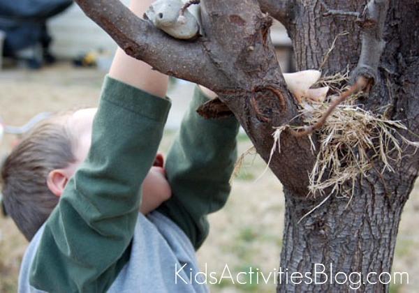 building nests in tree