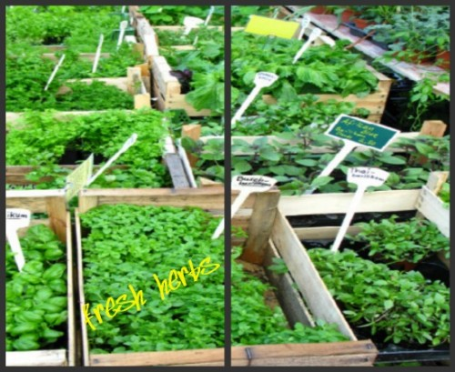 collage of fresh herbs with yellow text