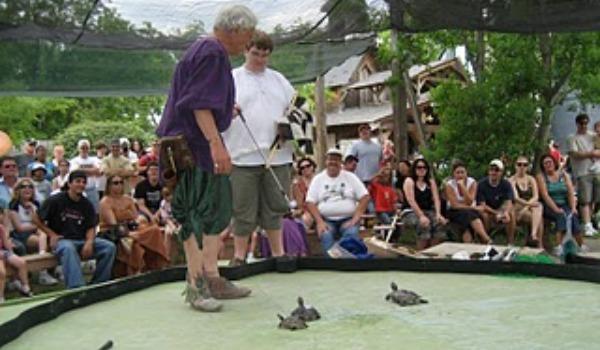 renaissance fair turtle race 600x350