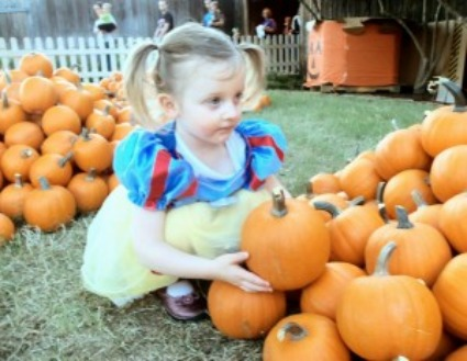 little girl in pumpkin patch