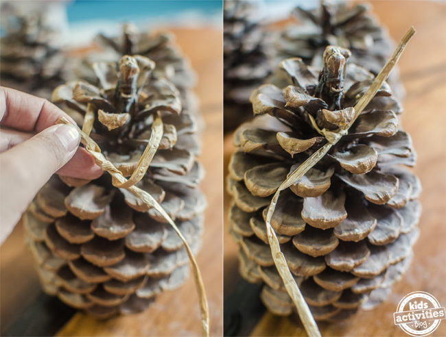 pine cone bird feeder 10