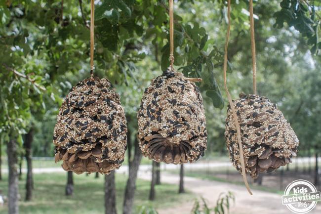 pine cone bird feeder 7