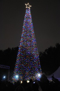 christmas tree in lights