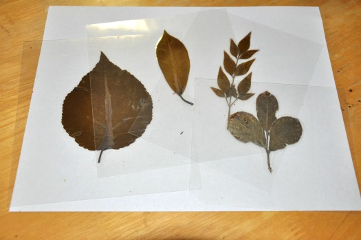 laminated leaves