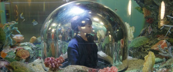 sealife ryan in bubble