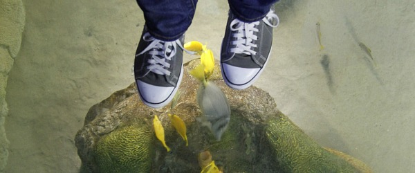 sealife shoes