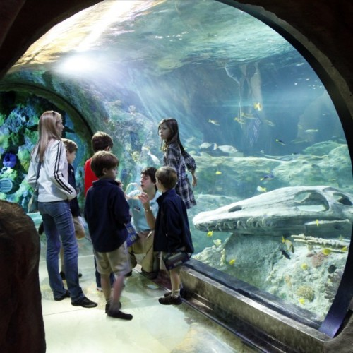 sealife tunnel