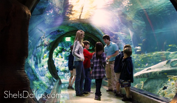 Sea Life aquarium tunnel - grapevine texas
