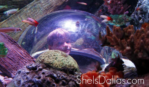 Sea Life boy in aquarium grapevine texas