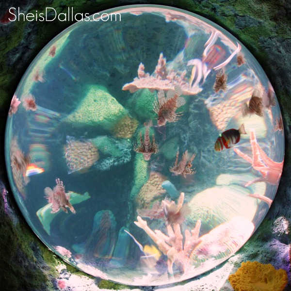Sea Life circle aquarium - Grapevine Texas