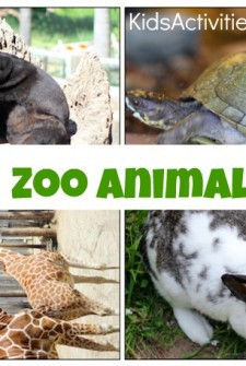 Zoo Animal Hunting Game For Toddlers