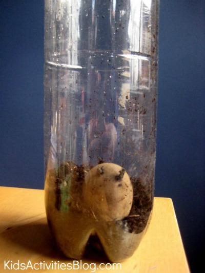 growing potato in bottle