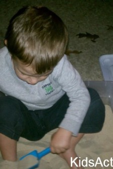 Beach in a Box: Digging for Shells and Dinosaurs