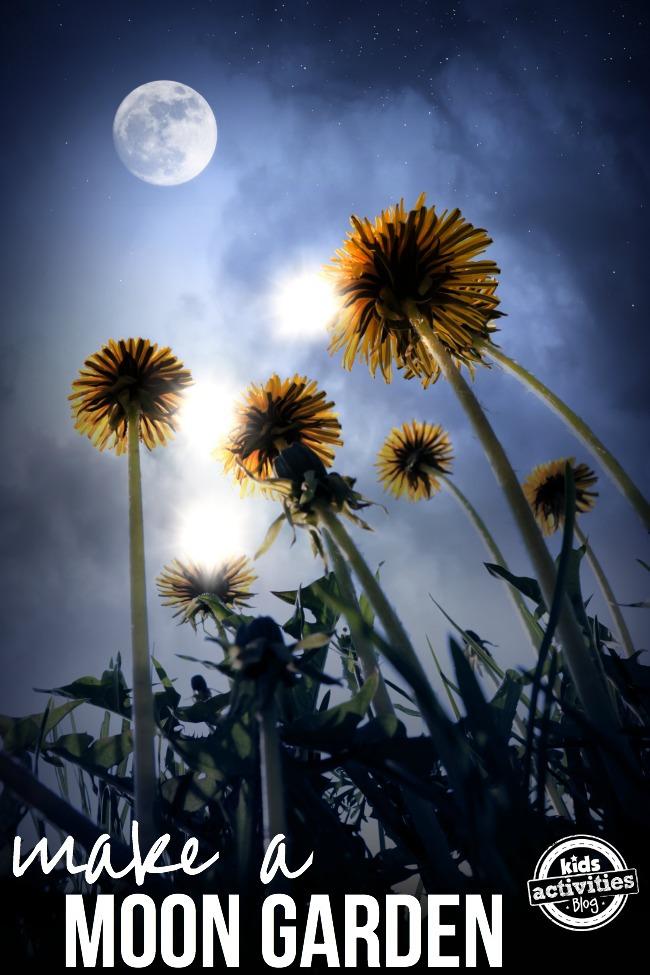 make a moon garden