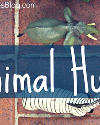 outdoor adventure animal hunt