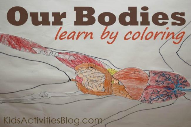Human Body System