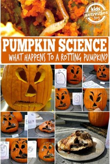 What happens to a rotting pumpkin?