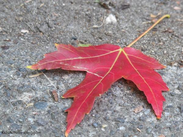 change of seasons leaves