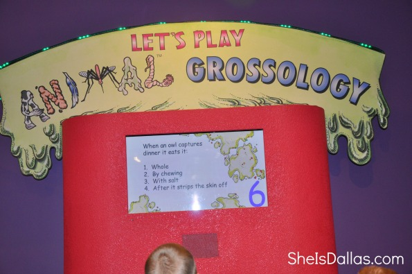 let's play animal grossology game - pictured is child looking at the screen of the Grossology Science exhibit playing game
