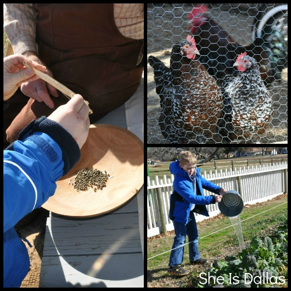 life on the farm - Nash Farm in Grapevine