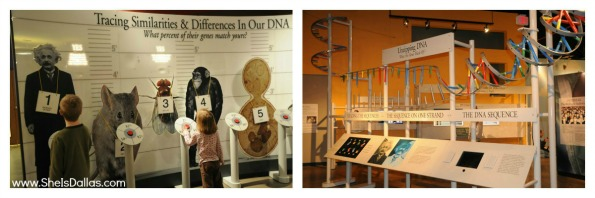 sci tech discovery center dna