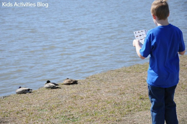 Bird watching {Learning about pond life}