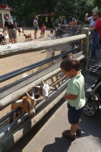 10 Things to do with Kids in St. Louis Missouri from Kids Activities Blog