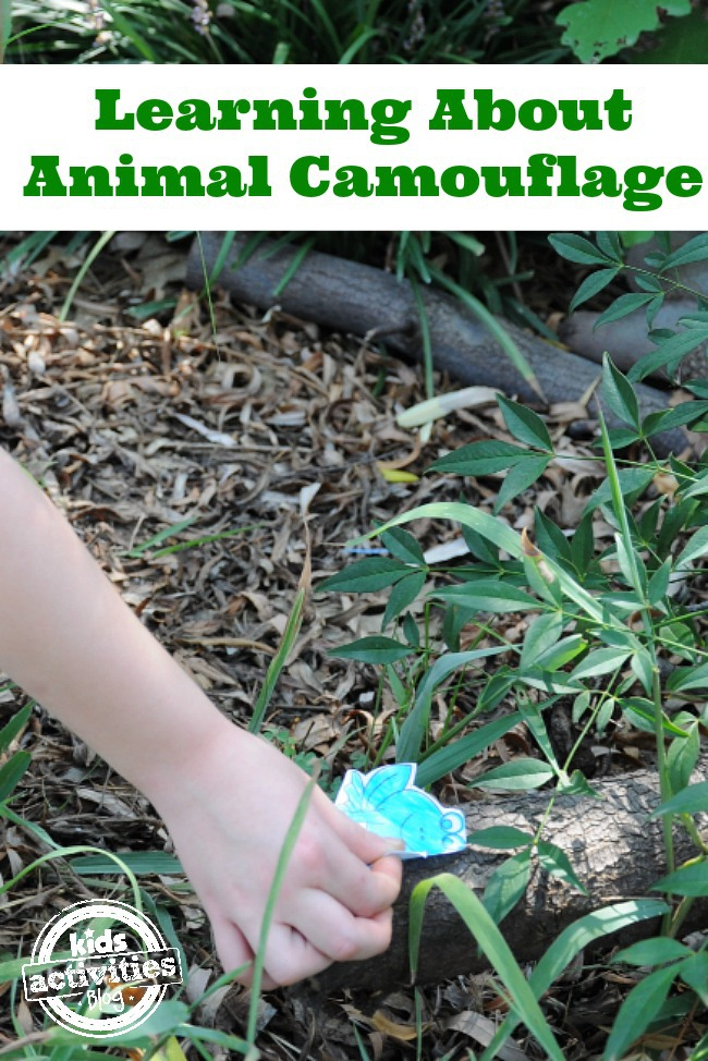 Learning about Animal Camouflage from Kids Activities Blog