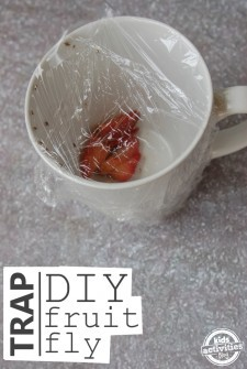 diy fruit fly trap 5