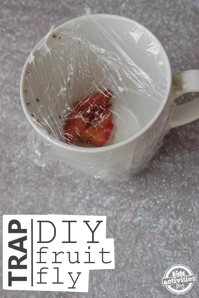 diy fruit fly trap is pumpkin a fruit