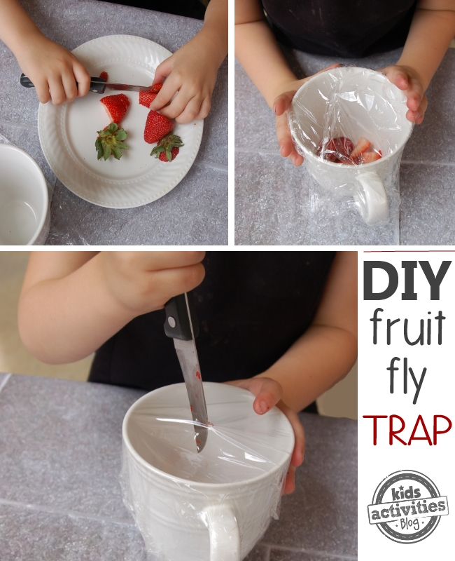 diy fruit fly trap collage