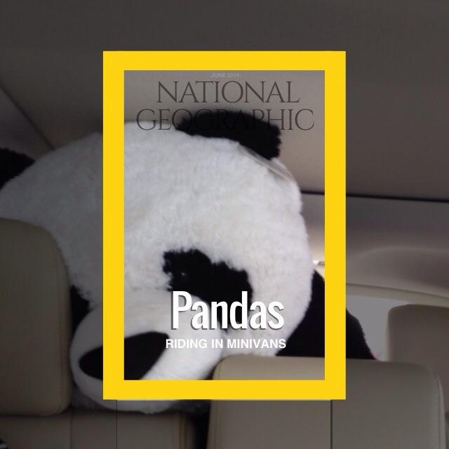 Studio App - Panda riding in a minivan